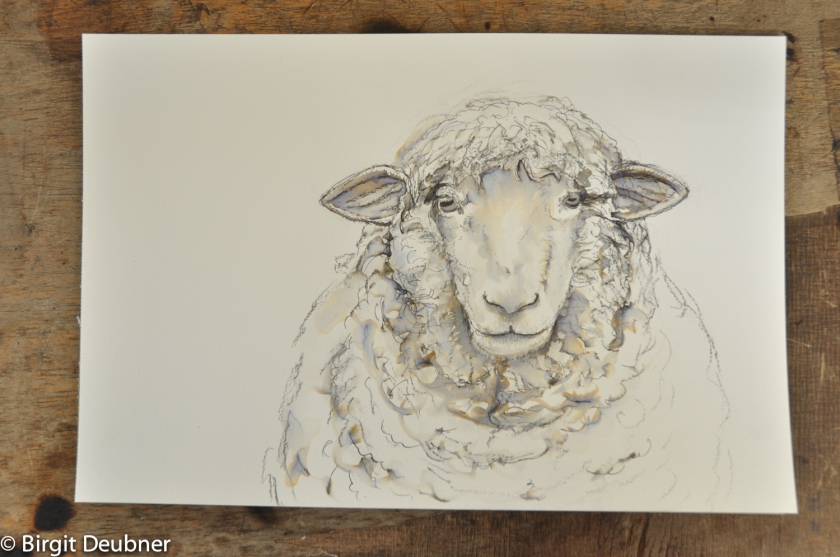 2015_Deubner_sheep_drawing_1500pixels_DSC_1879-2